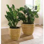 Blumentopf Hyazinthe, naturfarben, 2er Set